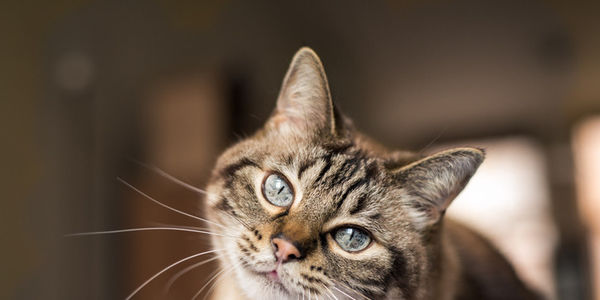 cat with green eyes tilting his head