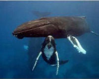Defend Whales from PG&E Seismic Testing