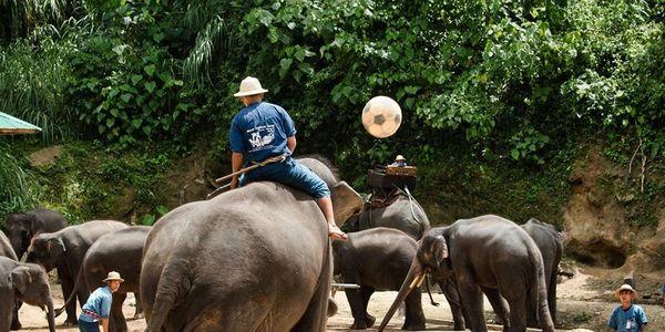 Elephant soccer, Care2