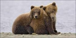 Ban Bear Hunting in Great Bear Rainforest