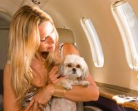 884039-1347028599-main - Improve Pet Safety on Chinese Airlines! - Travel and Tours