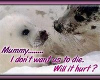 Canadian Tourism Boycott-dont visit Canada until the Seal Hunt end forever