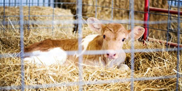 Idaho: Stop Trying to Cover Up Animal Cruelty