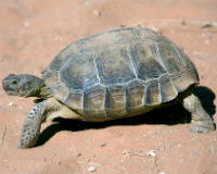 Save the Desert Tortoise Conservation Center