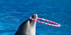 US, Join India in Banning All Dolphinariums