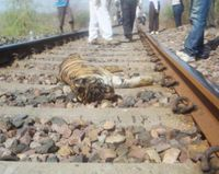 Prevent Tiger Deaths from Train Collisions in India