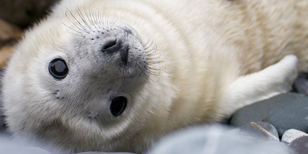 Save Dolphins and Seals - Stop This Killer Freezer Trawler