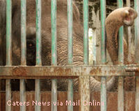 Send the World's Loneliest Elephant to Thailand