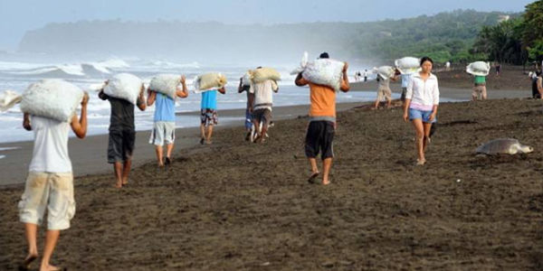Costa Rica- Stop Harvesting Endangered Turtle Eggs