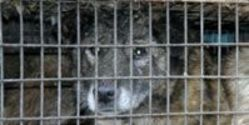 Ask Ebay to stop selling fur