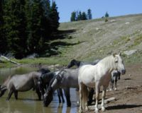 Stop the Massive Removal of Cloud's Wild Horse Herd