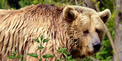 DEMAND AN END TO B.C. GRIZZLY BEAR TROPHY HUNT NOW, NOT TOMORROW!