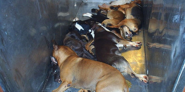 End the use of Gas Chambers in Animal Shelters in America