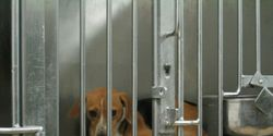 BOYCOTT MARSHALL PET PRODUCTS! STOP BREEDING ANIMALS FOR EXPERIMENTATION!