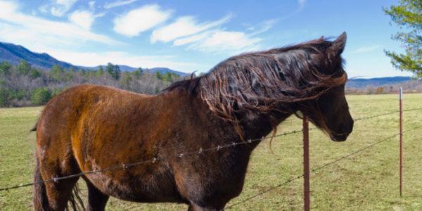 Stop Burning Horses to Make Them Prance!