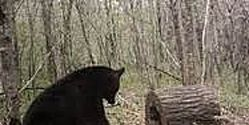 Ban Bear Baiting in Wisconsin