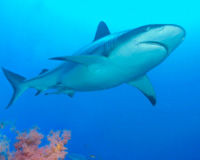 URGENT: Ban the Sale of Shark Fins in Guam!