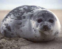 Ensure that Sable Island remains a protected habitat for seals