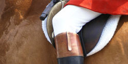 No More Horse Deaths -- Stop the Grand National Fox Hunt!
