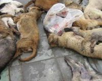 HARSHEST PUNISHMENTS for those who massacred dogs in Targu-Jiu - Romania