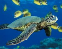 Stop Endangered Sea Turtle Experiments
