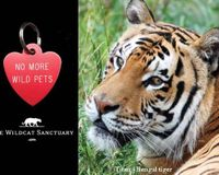 Take the No More Wild Pets Pledge