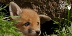 Save Cubs from Cruel Barbaric Hunts
