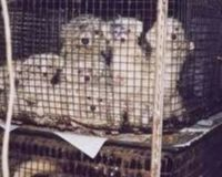 Stop the cruel puppy mill business in Quebec