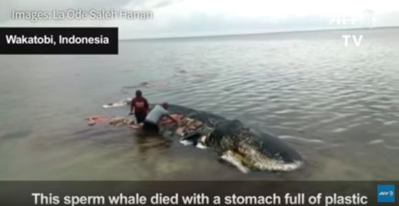 Whale dead with plastic in stomach in Indonesia