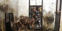Indonesia- Close the Surabaya Zoo