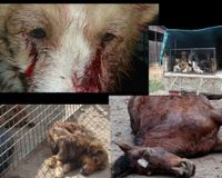 Romania: Tougher laws for acts of cruelty against animals