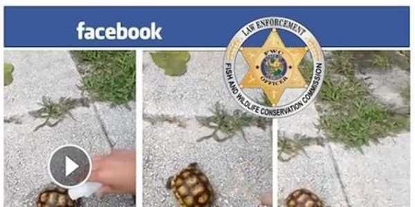 Demand Felony Cruelty Prosecution for Teens Who Tortured & Killed Tortoise
