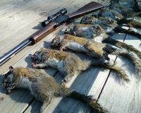Stop Animal Contest Kills In Texas