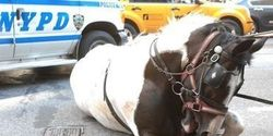 DEMAND CITY COUNCIL STOP HORSE CARRIAGES NOW!