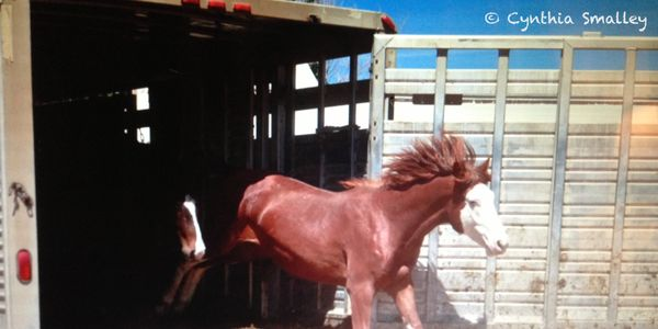 PLEASE HELP US... HELP THE WY14 HORSES!