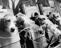 Stop Funding Nicotine Experiments on Animals
