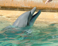 Demand Hilton Hotels Stop Exploiting Dolphins