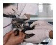Shut Down Animal Testing Laboratory's