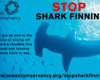 Stop the cutting off of shark fins and throwing the finless shark back into water