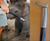 Tell Rhode Island- Protect Circus Elephants