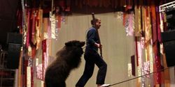 Save Masha - the bear who was taken away from her family & forced to perform at Russian circus.