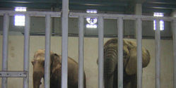 Sanctuary for Kansas Zoo Elephants