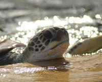 Stop Sea Turtle Farming