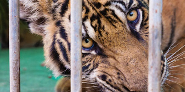 West Virginia: Ban Exotic Animals as Pets