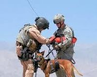 Stop Euthanizing Military Dogs