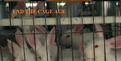 Make farming Rabbits in Cages illegal