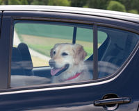 Woman Fired from Walmart for Reporting Dog in Hot Car