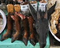 Stop Using Endangered Animal Products In Traditional Chinese Medicine