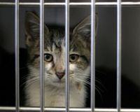 Stop Using Live Cats at University of Virginia