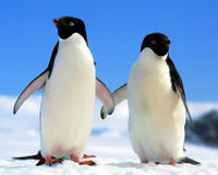 Save Penguins from Extinction